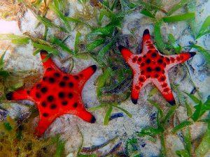 グローバルにエコナセイカツ、ベトナムで急ピッチな開発が進むフーコック島(Phú Quốc)美しいサンゴの生息環境はギリギリ。オーバーツーリズムが心配